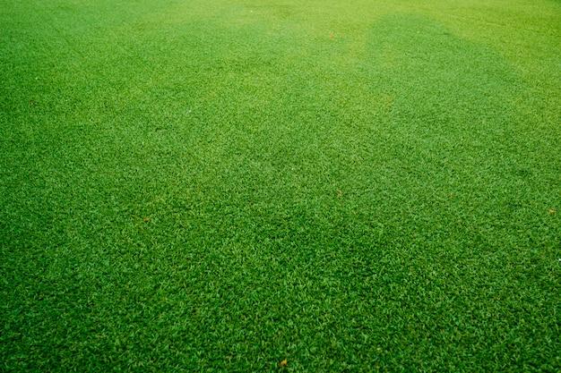 Fond de terrain d'herbe