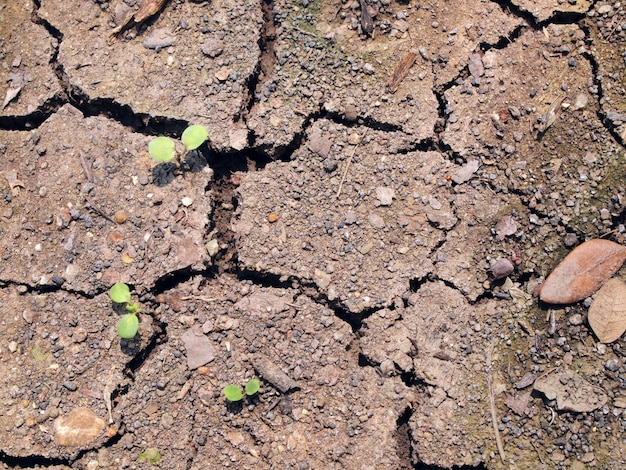 Fond de terre fissurée sèche