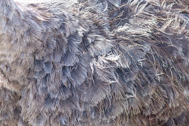 Fond de texture abstraite de plume d'autruche.