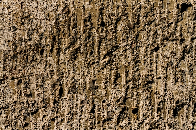 Fond de texture d'arbre en bois avec espace copie