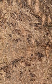 Fond de texture d'arbre en macrophotographie