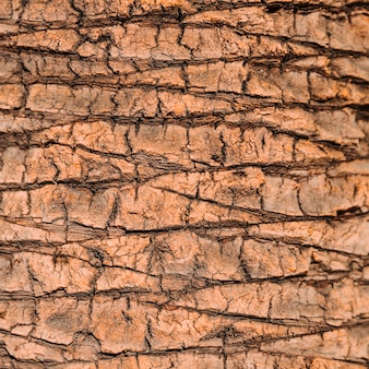 Fond de texture d'arbre