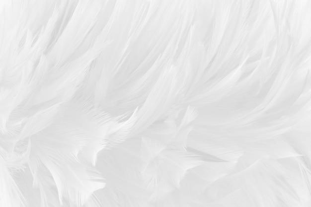 Fond de texture de beaux oiseaux gris blanc