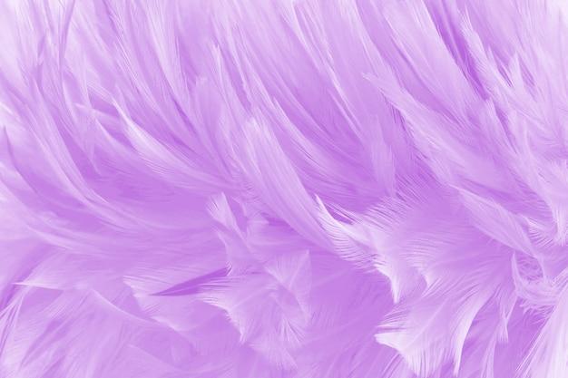 Fond de texture de belles plumes d'oiseau violet clair.