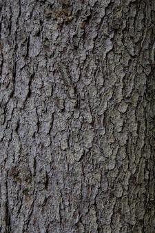 Fond de texture bois. l'écorce est la couche la plus externe des tiges et des racines des plantes ligneuses. les plantes à écorce comprennent les arbres, les vignes ligneuses et les arbustes.