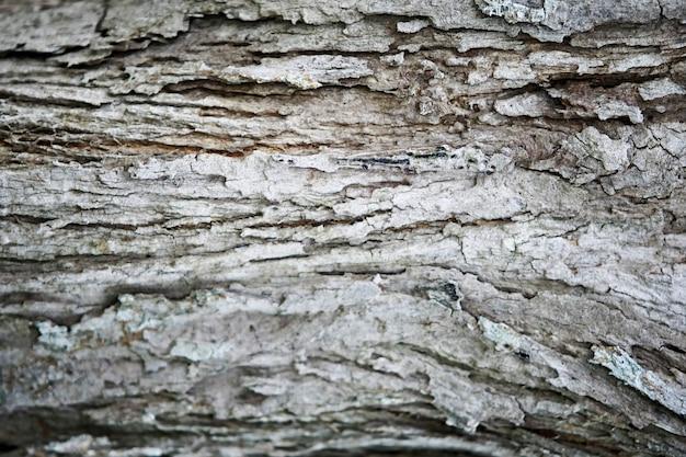 Fond de texture en bois écorce, gros plan