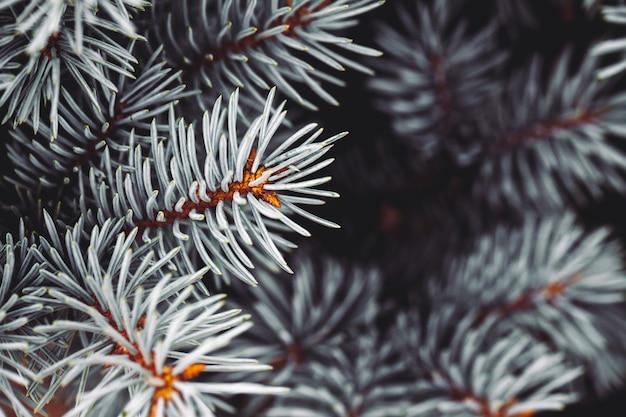 Fond une texture des branches d'arbres à fourrure pour une carte de noël