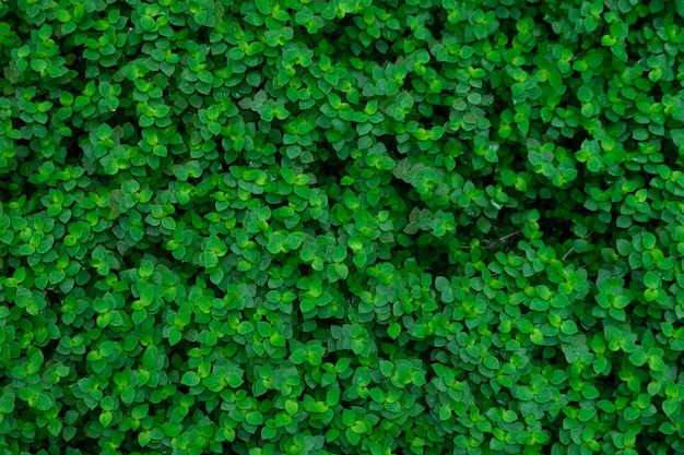 Fond de texture de congé vert.
