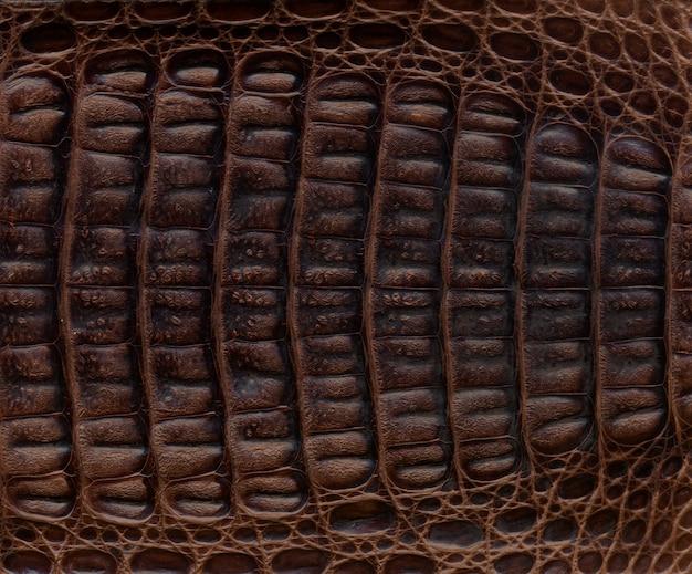 Fond texturé en cuir de crocodile
