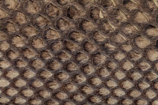 Fond de texture cuir véritable peau de serpent