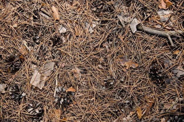 Fond texturé du sol de la forêt d'automne