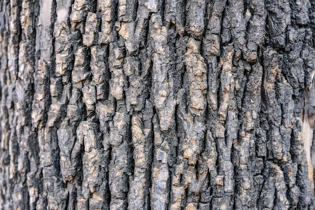 Fond de texture d'écorce d'arbre rugueux