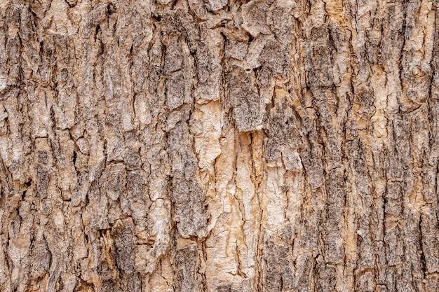 Fond de texture d'écorce d'arbre
