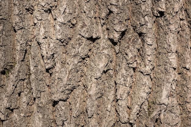 Fond de texture écorce d'arbre
