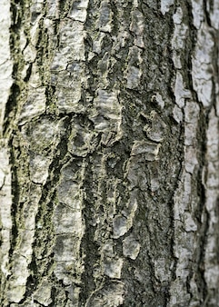 Fond de texture d'écorce de bois se bouchent en haute résolution avec texture visible pour ou arrière-plan ou utilisation de conception, coup de texture d'écorce d'arbre brun, remplissant le cadre