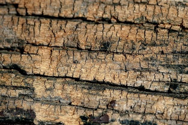 Fond de texture d'écorce en bois