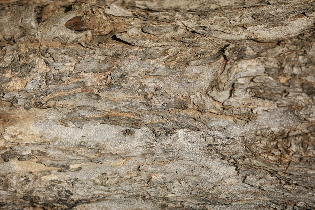 Fond de texture d'écorce de bois