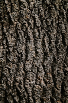 Fond, texture - écorce brune rugueuse d'un vieil arbre