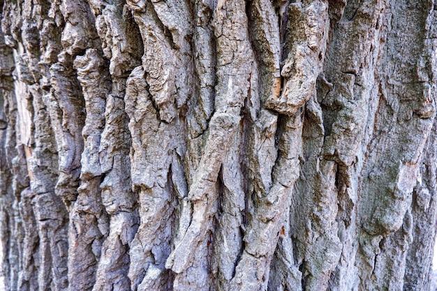 Fond de texture d'écorce de chêne