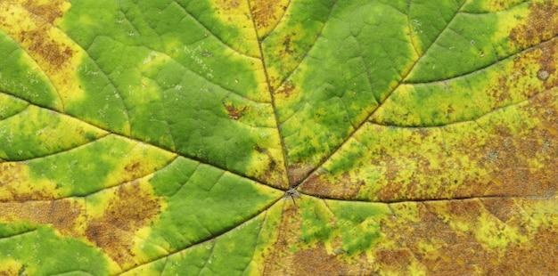 Fond de texture feuille d'automne