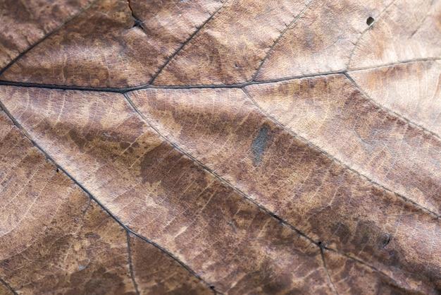 Fond de texture de feuille brune sèche