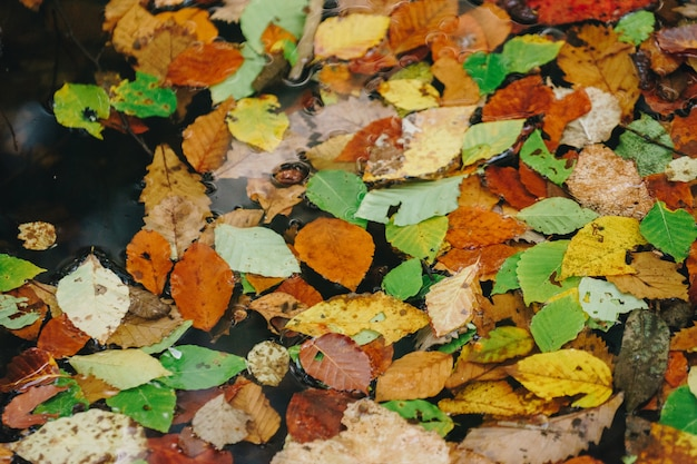 Fond de texture de feuille colorée