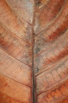 Fond de texture de feuille sèche