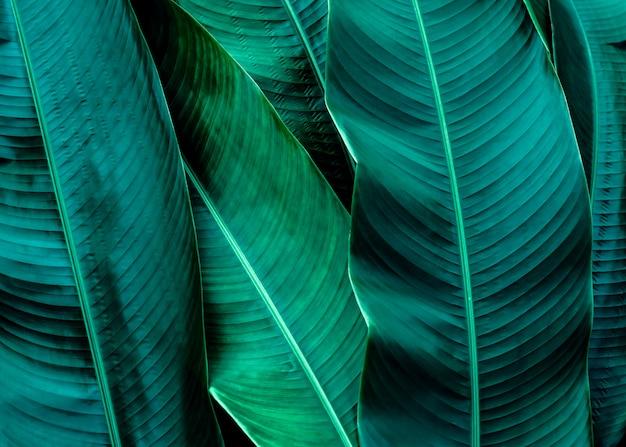 Fond de texture de feuille verte