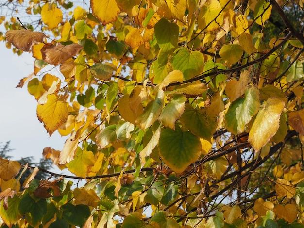 Fond de texture de feuilles d'automne jaune