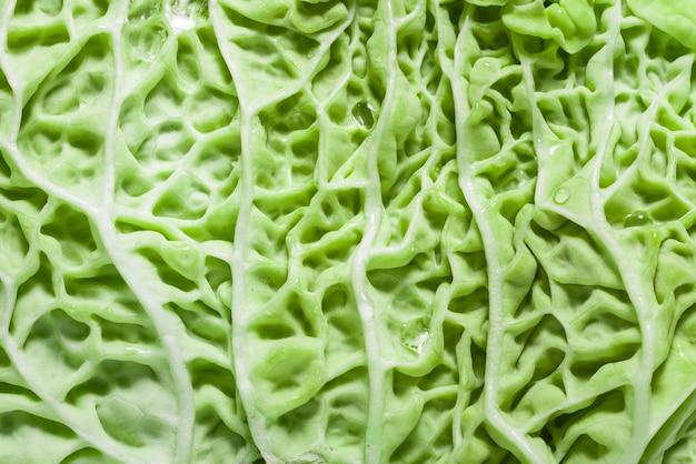 Fond texturé de feuilles naturelles fraîches vertes