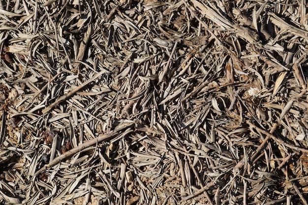 Fond de texture de feuilles sèches d'oliviers