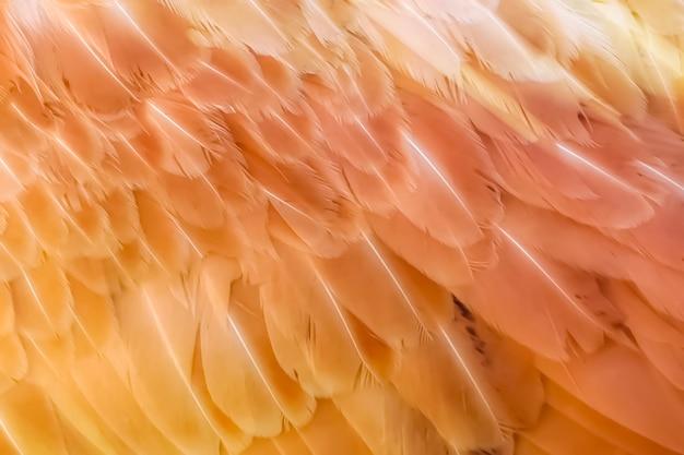 Fond texturé flou pour la conception, avec des plumes d'oiseaux orange. fond, texture