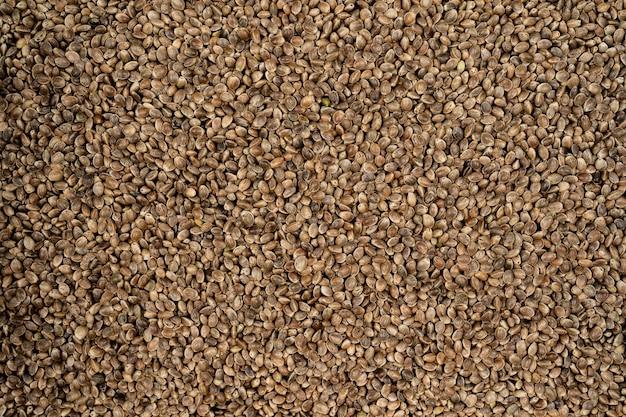 Fond et texture de graines de chanvre sèches, graines de cannabis, graines de chanvre en gros plan pour la conception