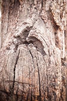 Fond texturé gros plan bois très vieux fissuré