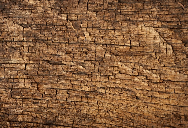 Fond texture grossière bois