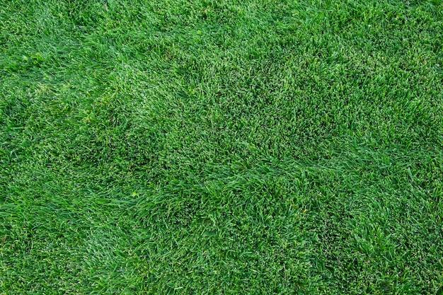 Fond de texture d'herbe verte arrière-cour de pelouse verte pour le fond