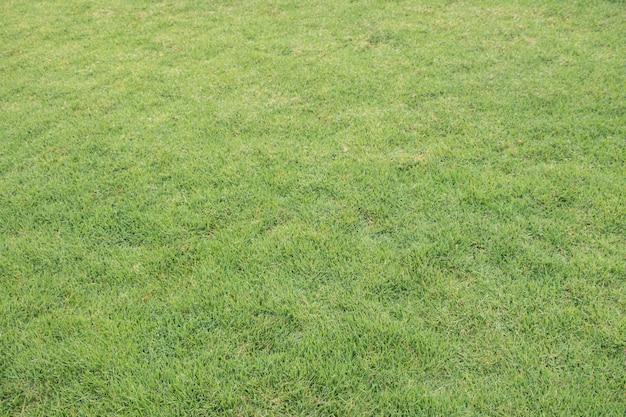Fond de texture d'herbe verte, motif de cour verte.