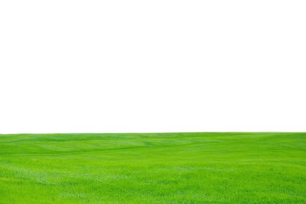 Fond de texture d'herbe verte, vue rapprochée