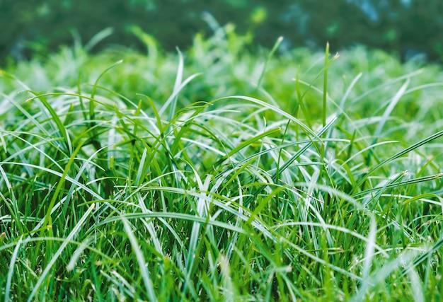 Fond de texture d'herbe verte