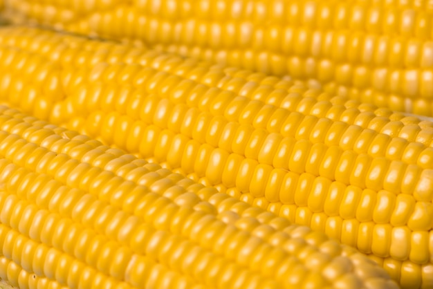 Fond de texture de maïs, maïs biologique frais