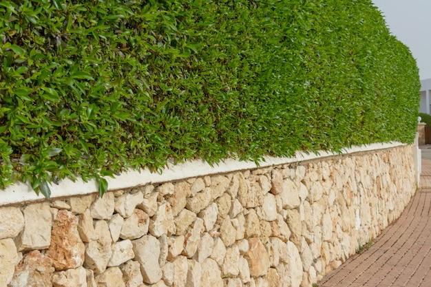 Fond de texture de mur vert avec carrelage en pierre.