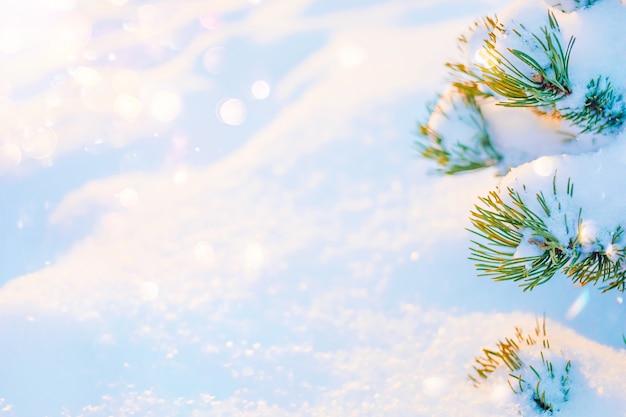 Fond de texture neigeuse ensoleillée d'hiver avec sapin