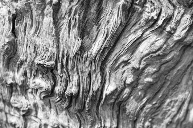 Fond de texture organique de bois flotté pourri.