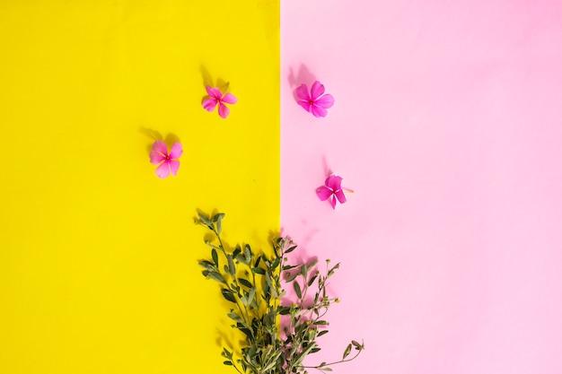 Fond de texture de papier rose et jaune, plantes vertes et fleurs pervenche de madagascar