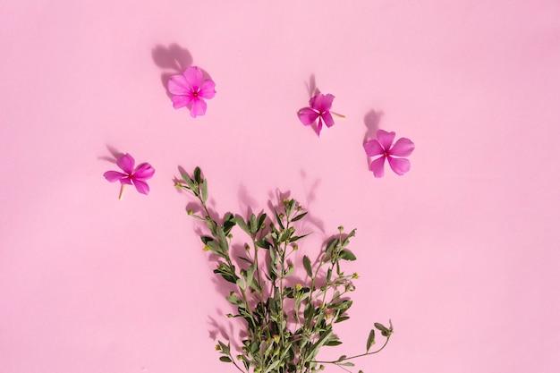 Fond de texture de papier rose, plantes vertes et fleurs pervenche de madagascar