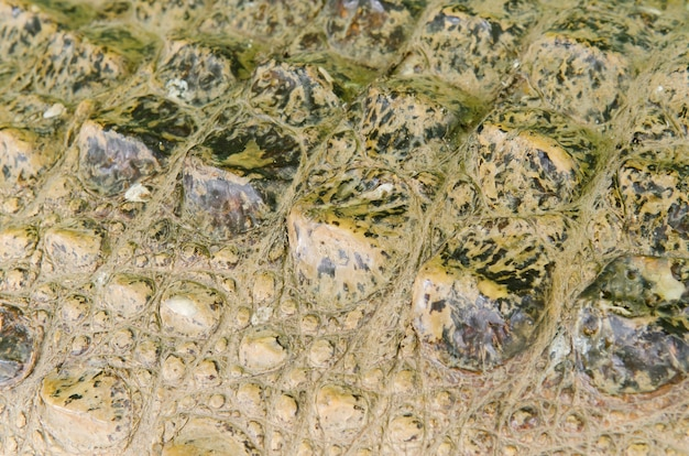 Fond de texture de peau de crocodile