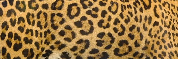 Fond de texture de peau de jaguar, léopard et ocelot