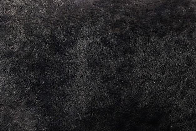Fond de texture de peau de panthère noire