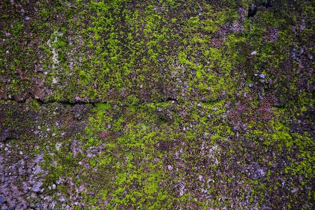 Fond de texture de pierre moussue dans la nature. fond de nature