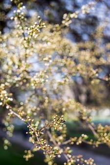 Fond et texture de plantes naturelles